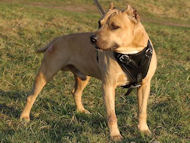 Protection/Attack Leather Dog Harness for Pitbull